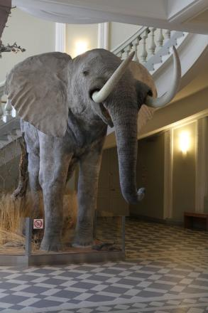 An African elephant greets visitors in the lobby