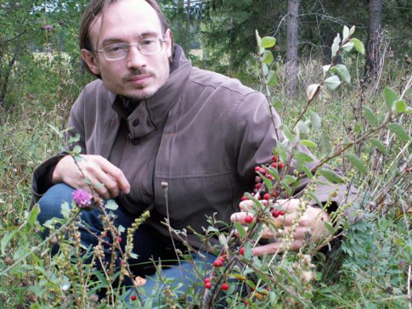 Cotoneaster integerrimus has long been believed to occur native in the Leningrad Region of Russia but was proven to be a relic of cultivation. Leningrad Region, Elizavetino, Aug 2007, N.Sennikov