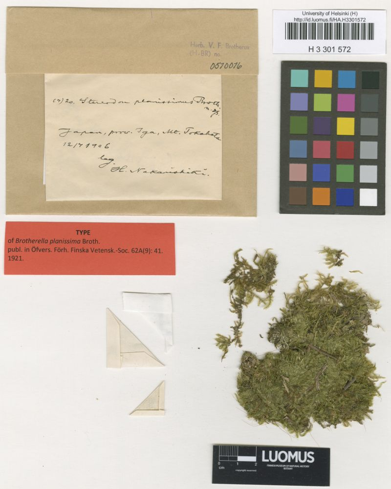 Bryologist Viktor Ferdinand Brotherus (1849-1929) was one of the internationally most renowned Finnish scientists of his time. Specimens in Herb. V. F. Brotherus cover almost the entire Earth. Type of Brotherella planissima Broth. = Brotherella henonii (Duby) M.Fleisch (H3301572). Photo: Luomus/Jaana Haapala.