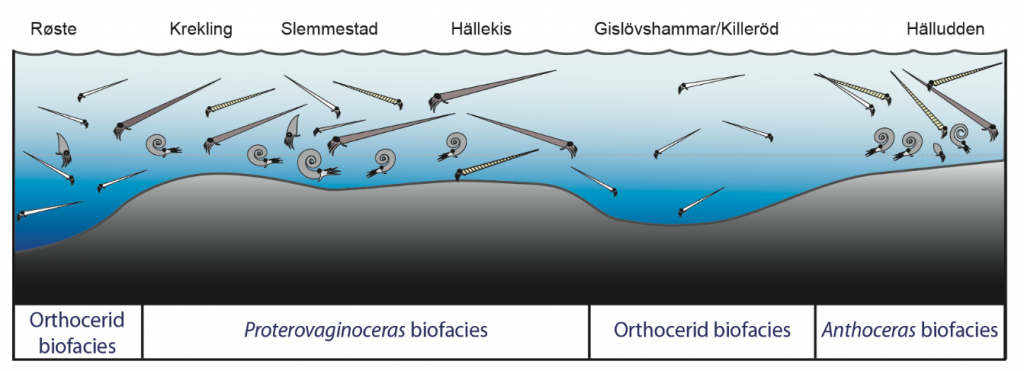 Palaeoecological reconstruction of fossil cephalopod assemblages across Baltoscandia during the Middle Ordovician period, c. 465 million years ago