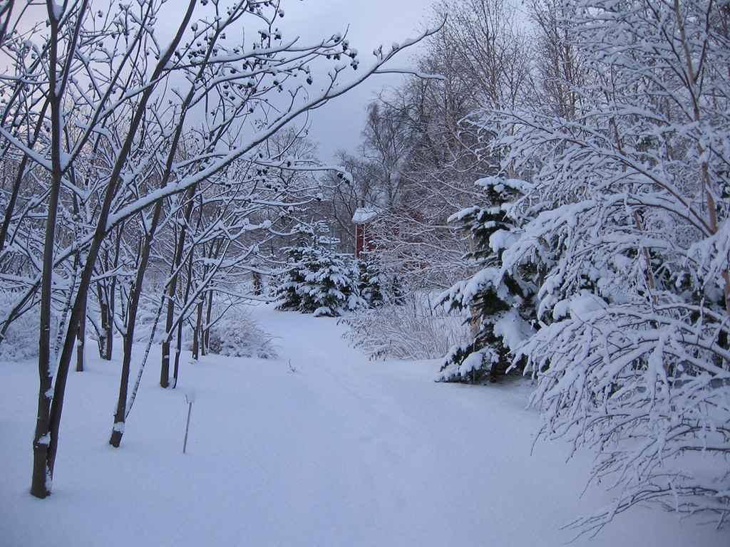 hokkaido university botanical garden winter fasci garden