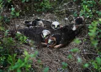 Potku's nestlings